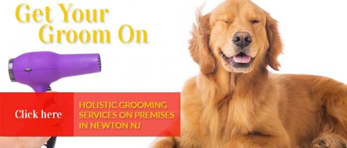 Pet Grooming | Maxwell & Mollys | Newton NJ